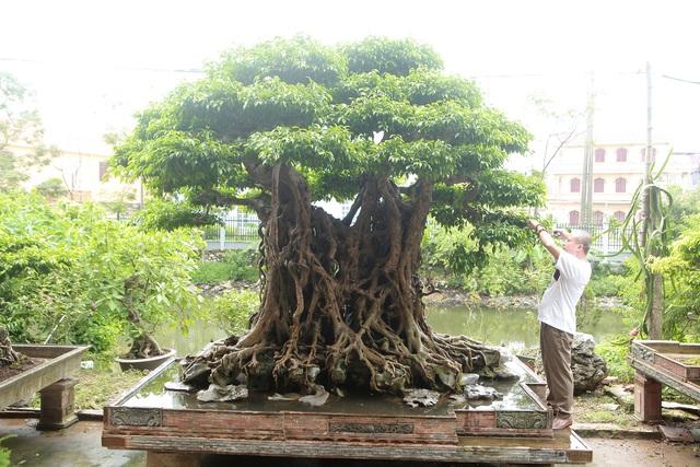 """""""Báu vật ẩn mình"""" có tuổi đời 500 năm ở Hà Nội, trả 100 cây vàng không bán"""