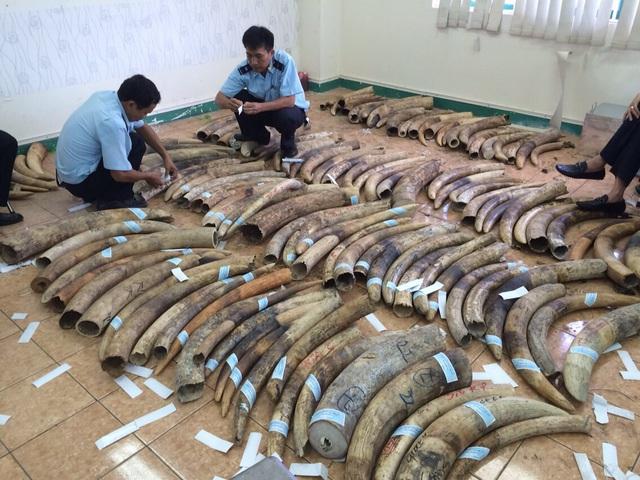 48 năm tù cho 4 đối tượng vi phạm liên quan đến động vật hoang dã