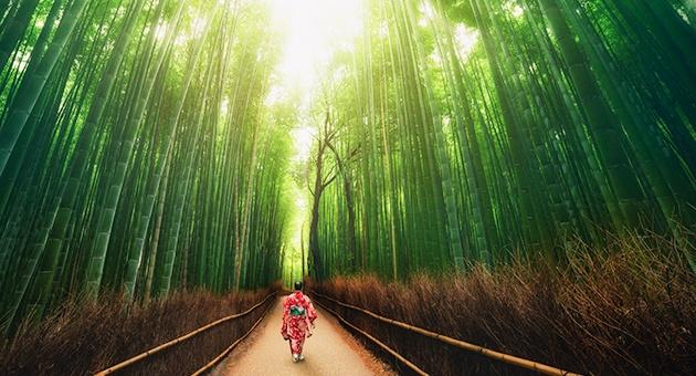 Cả thế giới đang phải học theo kỹ năng có từ hàng trăm năm qua của người Nhật
