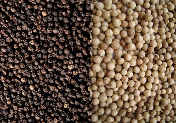 Cơ hội xuất khẩu 1 container 20ft hạt tiêu đen và trắng đến từ thương nhân Bangladesh