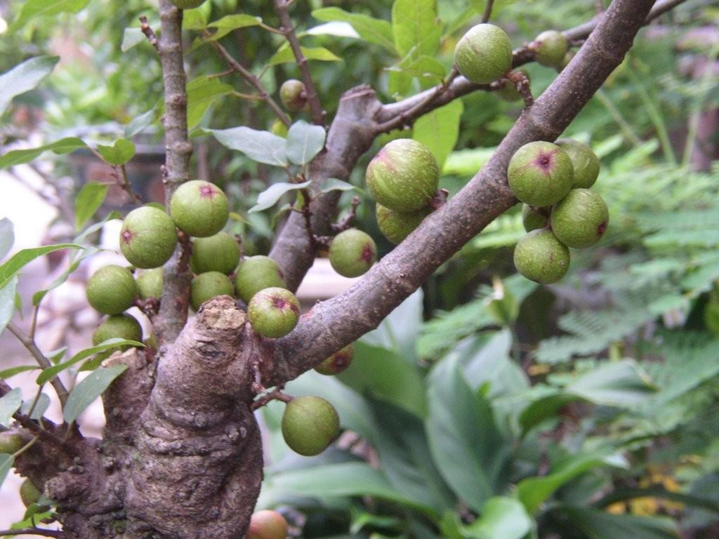 Cuối năm trồng ngay cây này trong nhà, gia đình PHÁT TÀI PHÁT LỘC, may mắn đủ đường vì luôn được quý nhân phù trợ
