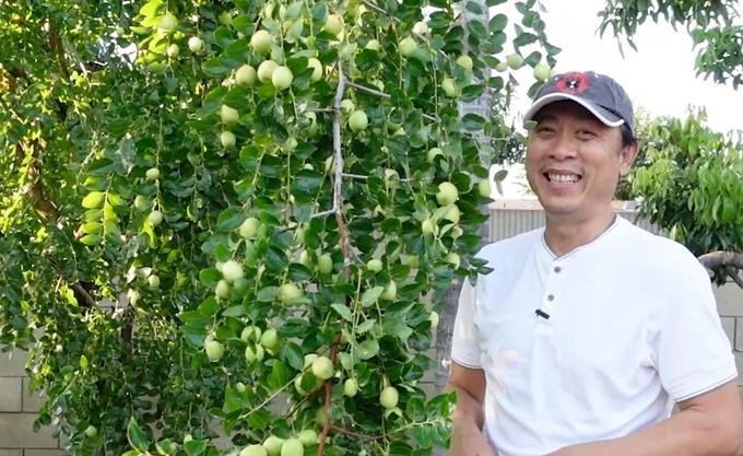 Vườn 1.200 m2 bốn mùa trĩu quả của Vân Sơn